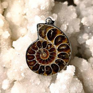Ammonite pendentif